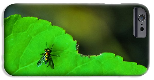 Bug iPhone Cases - The Fly iPhone Case by Marvin Spates