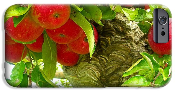 Hornets Nest iPhone Cases - The Forbidden Fruit iPhone Case by Cheryl Parker