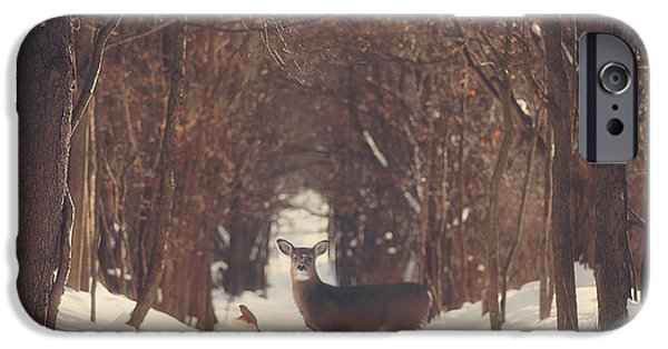 Winter Trees Photographs iPhone Cases - The Forest of Snow White iPhone Case by Carrie Ann Grippo-Pike