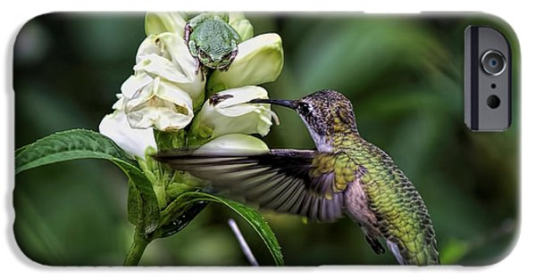 Flying Frog iPhone Cases - The Frog And The Hummingbird iPhone Case by Ron Grafe