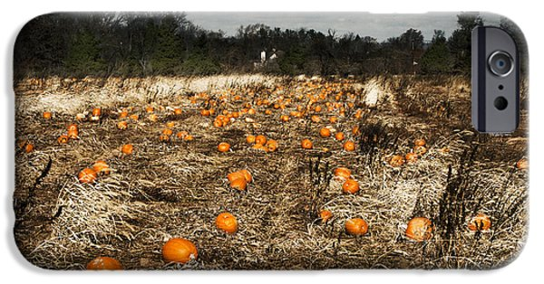 Farm Stand iPhone Cases - The Frost Is On The Pumpkins iPhone Case by Phil Welsher