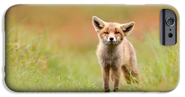 Fox Kit iPhone Cases - The Funny Fox Kit iPhone Case by Roeselien Raimond
