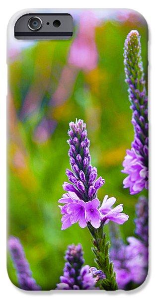 The Garden Palette iPhone Case by Christi Kraft