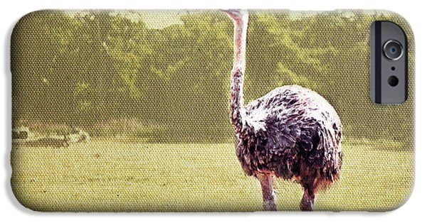 Ostrich iPhone Cases - The Gaze iPhone Case by Eden Baed