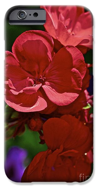 Red Geraniums iPhone Cases - The Geraniums iPhone Case by Gwyn Newcombe