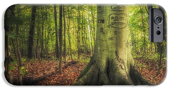 Root iPhone Cases - The Giving Tree iPhone Case by Scott Norris