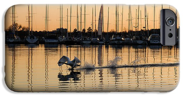 Swans... iPhone Cases - The Golden Takeoff - Swan Sunset and Yachts at a Marina in Toronto Canada iPhone Case by Georgia Mizuleva