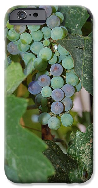 The Grapes iPhone Case by Holly Blunkall