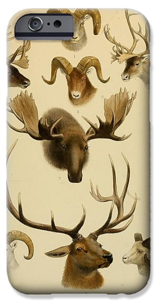 Biological Paintings iPhone Cases - The great and small game of Europe  western and northern Asia and America iPhone Case by LoveMap