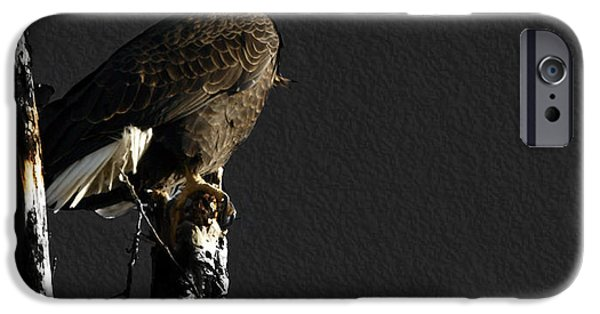 Eagle iPhone Cases - The Great Bald Eagle 1  iPhone Case by Thomas Young