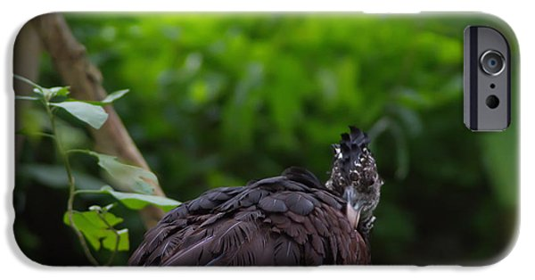 Michelle iPhone Cases - The Great Curassow 2 iPhone Case by Michelle Meenawong
