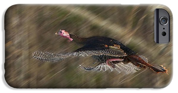Eastern Wild Turkey iPhone Cases - The Great Escape iPhone Case by TAPS Photography