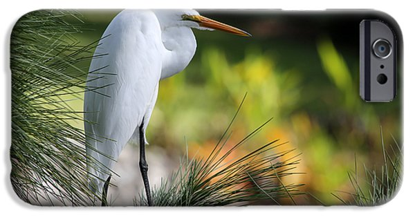 Cattle Egret iPhone Cases - The Great White Egret iPhone Case by Sabrina L Ryan