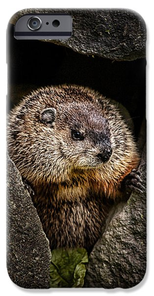 Furry iPhone Cases - The Groundhog iPhone Case by Bob Orsillo