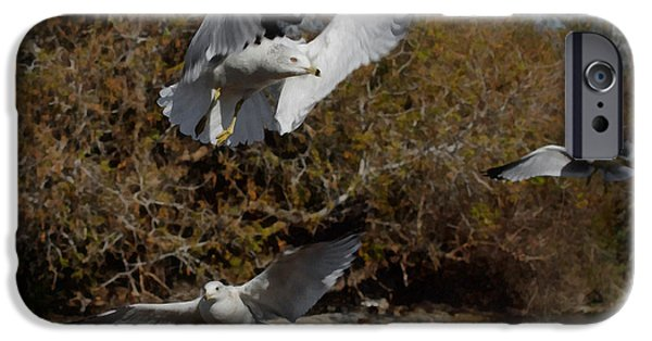 Sea Birds iPhone Cases - The Gulls iPhone Case by Ernie Echols