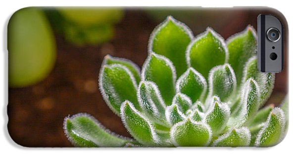 Cactus iPhone Cases - The Hairy Plant iPhone Case by Sarit Sotangkur