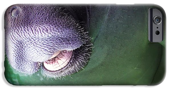 Creature iPhone Cases - The Happy Manatee iPhone Case by Karen Wiles