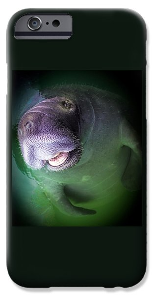 Animals Photographs iPhone Cases - The Happy Manatee iPhone Case by Karen Wiles