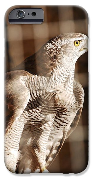 Birds iPhone Cases - The Hawk iPhone Case by Gina Dsgn