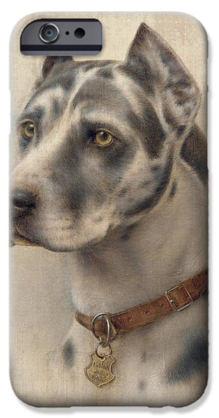 Doberman iPhone Cases - The Head of a Doberman iPhone Case by Wilhelm Schwar
