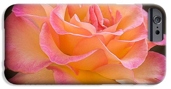 Rose Pyrography iPhone Cases - The Healing Rose iPhone Case by Sharon  Voysey