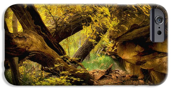 Oak Creek iPhone Cases - The Hidden Path  iPhone Case by Saija  Lehtonen