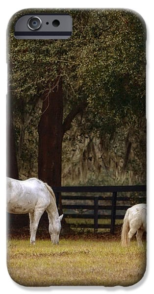 The Horse and The Pony - Standard Size iPhone Case by Mary Machare