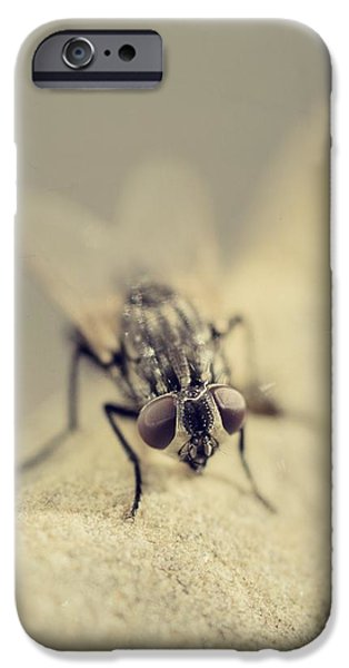 Gray Hair iPhone Cases - The Housefly I iPhone Case by Marco Oliveira