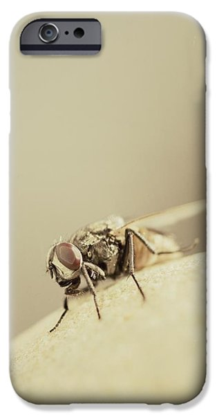Gray Hair iPhone Cases - The Housefly II iPhone Case by Marco Oliveira