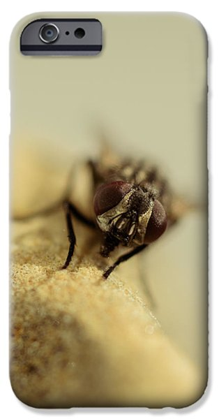 Gray Hair iPhone Cases - The Housefly IV iPhone Case by Marco Oliveira