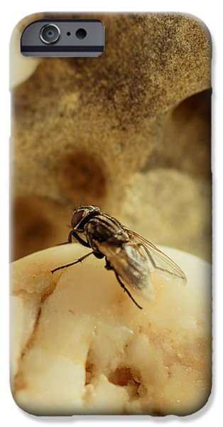 Gray Hair iPhone Cases - The Housefly V iPhone Case by Marco Oliveira