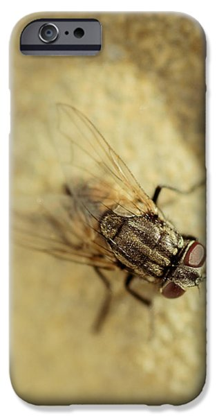 Gray Hair iPhone Cases - The Housefly VI iPhone Case by Marco Oliveira
