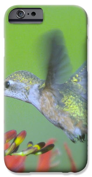 THE HUMMING BIRD SIPS  iPhone Case by Jeff  Swan