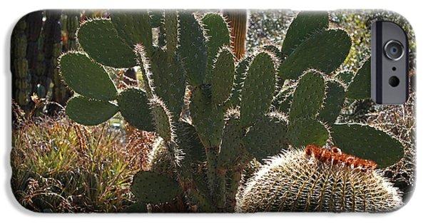 Cactus iPhone Cases - The Huntington Desert Garden iPhone Case by Rona Black