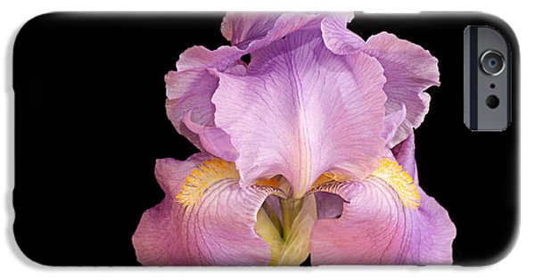Pinks And Purple Petals iPhone Cases - The Iris In All Her Glory iPhone Case by Andee Design