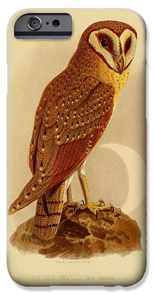 Business Paintings iPhone Cases - The Java Owl Cassell iPhone Case by Unknown Artist