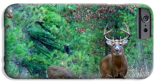 Whitetail Deer iPhone Cases - The King iPhone Case by Thomas Young