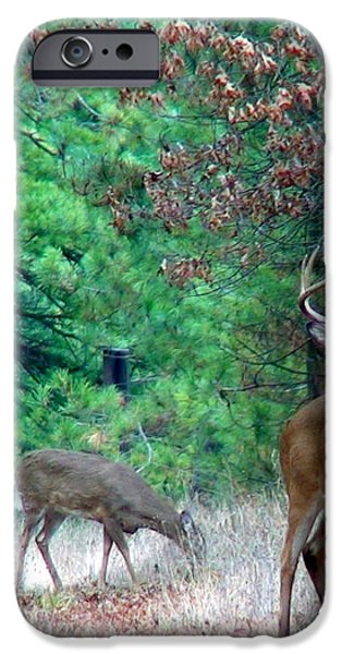 The King iPhone Case by Thomas Young