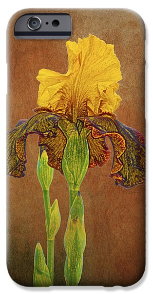 Yellow Bearded Iris iPhone Cases - The Kings Prize Iris iPhone Case by Michael Peychich