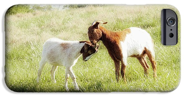 Animals Photographs iPhone Cases - The Kiss iPhone Case by Amy Tyler