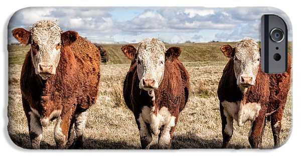 Animal Artwork iPhone Cases - The ladies three colourful cows iPhone Case by John Farnan
