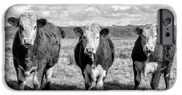 Animal Artwork iPhone Cases - The ladies three cows iPhone Case by John Farnan