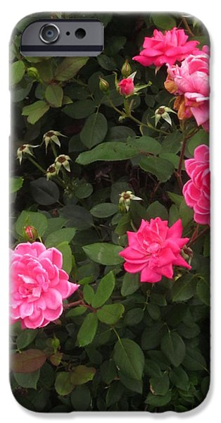 Guy Ricketts Photography iPhone Cases - The Land Of Pink Flowers iPhone Case by Guy Ricketts