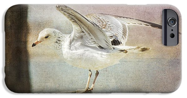 Seagull iPhone Cases - The Landing iPhone Case by Betty LaRue