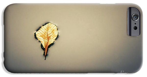 Fallen Leaf On Water iPhone Cases - The last breath of a fallen leaf iPhone Case by Giuseppe Esposito