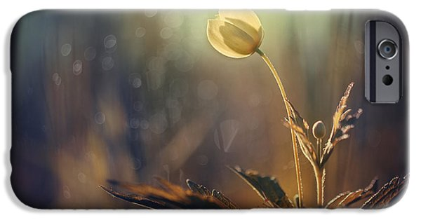 Spring Photographs iPhone Cases - The Last Light iPhone Case by Magda  Bognar