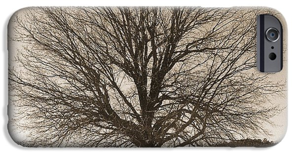 R. Mclellan Photography iPhone Cases - The Last Oak iPhone Case by R McLellan