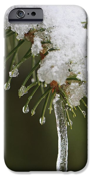 Nature Study iPhone Cases - The Last Snow iPhone Case by Adam Romanowicz