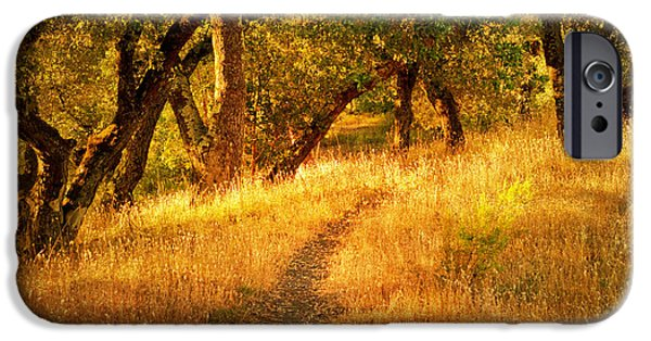 Pathway iPhone Cases - The Late Afternoon Walk iPhone Case by Roselynne Broussard