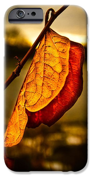 Dreamscape iPhone Cases - The Leaf Across The River iPhone Case by Bob Orsillo